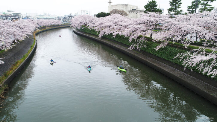 綾瀬川の桜とカヌー